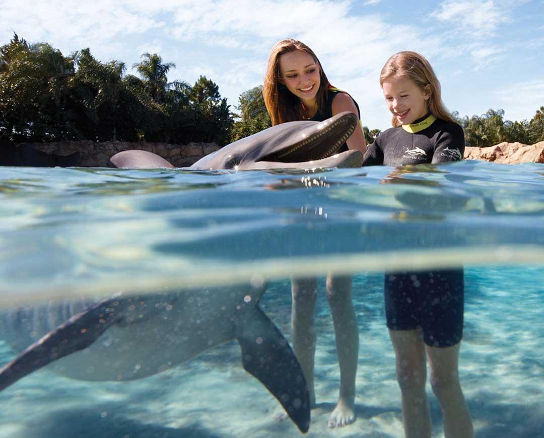 Discovery Cove, book dolphin swim